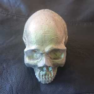 Irridescent skull in green, red and gold